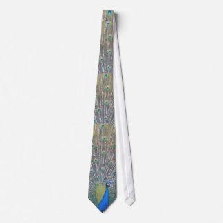 Pavão (esse) gravata