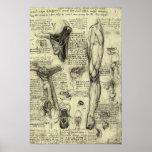 Pé humano Leonardo da Vinci da laringe da anatomia Posters