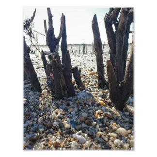 Pebble Beach Impressão De Foto