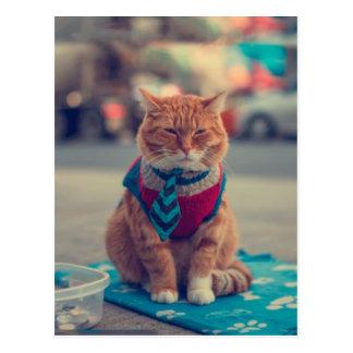 Pedido de assento do gato bege do laço cartão postal