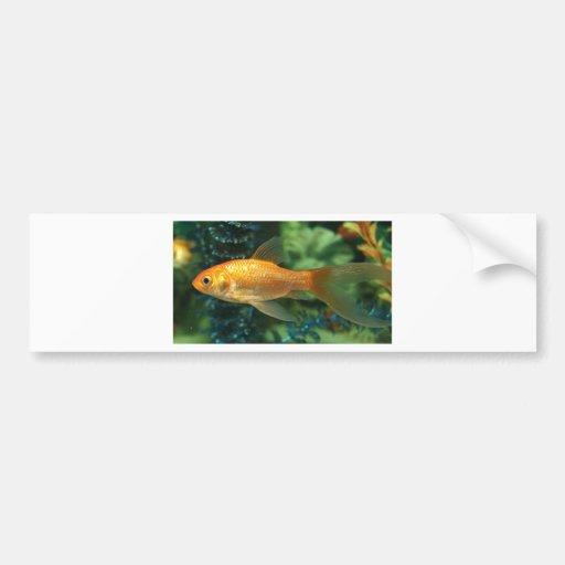 Peixe dourado adesivo