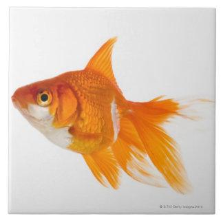 Peixe dourado, vista lateral