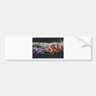 peixes adesivo