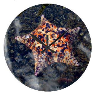 Peixes coloridos da estrela do pulso de disparo de relógios para paredes