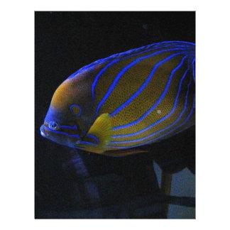 Peixes coloridos modelo de panfletos