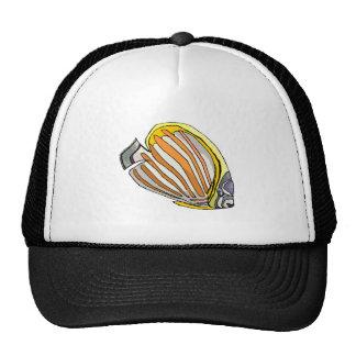 Peixes da borboleta bone