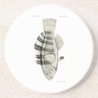 Peixes da ciência NZ do vintage - peixes unidos do Porta Copos De Arenito