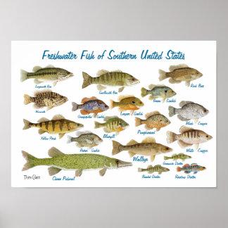 Peixes de água doce dos Estados Unidos do sul Pôster