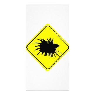 Peixes de combate Siamese do amor do sinal de Cartão Com Foto