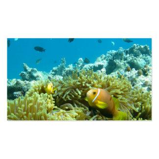 Peixes do aquário modelo cartoes de visitas