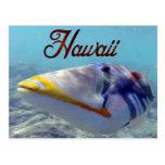 Peixes do estado de Havaí - Humuhumunukunukuapua'a Cartoes Postais