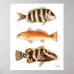 Peixes do jogo da água salgada impressão