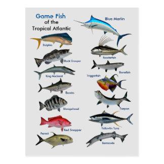Peixes do jogo do cartão atlântico tropical