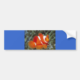 peixes do nemo adesivo para carro