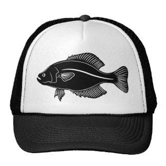 Peixes do tipo de peixe boné