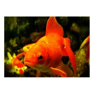 Peixes dourados cartão de visita grande