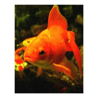 Peixes dourados panfletos coloridos