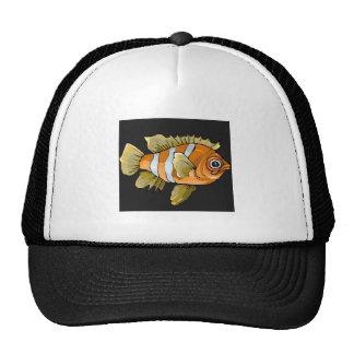 Peixes listrados alaranjados bone