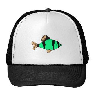 Peixes listrados verdes bonés