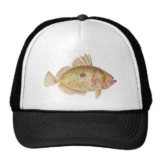 Peixes - peixe-galo - Zeus Faber Boné