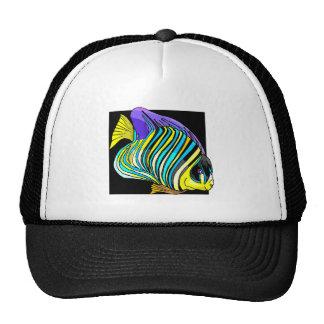 Peixes tropicais bone