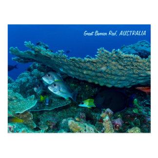 Peixes tropicais do cartão do mar coral