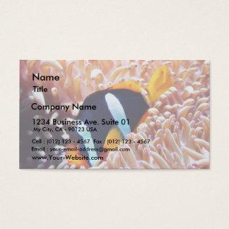 Peixes tropicais dos peixes do palhaço cartão de visitas