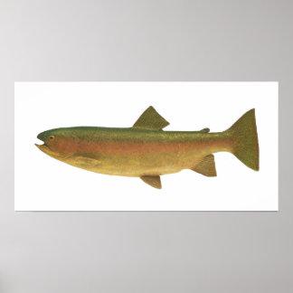 Peixes - truta de arco-íris - gairdnerii do Salmo Posters