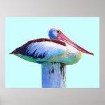 Pelicano colorido tropical pôsteres