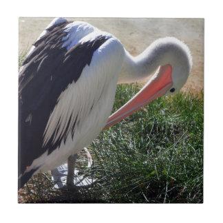 Pelicano da preparação