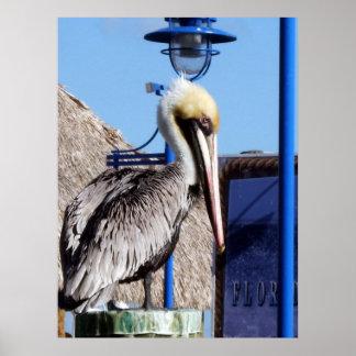 Pelicano de Miami Poster