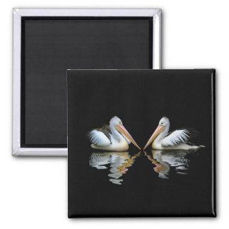 PELICANO EMPARELHADO! (~ do pelicano australiano) Ímã Quadrado
