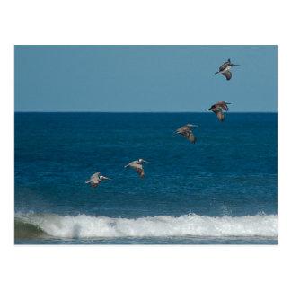 Pelicanos que voam na formação, Costa Rica Cartão Postal