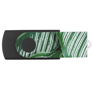 Pen Drive As folhas do verde com branco listram o close up