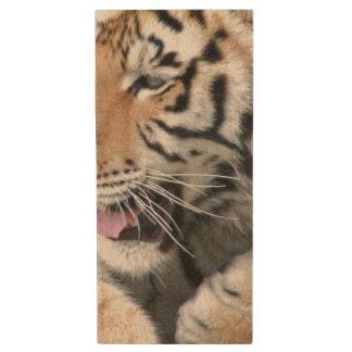 Pen Drive De Madeira A cara das patas do tigre Eyes a fotografia dos