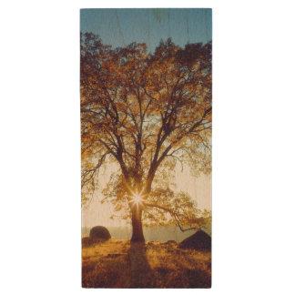 Pen Drive Floresta nacional preta dos carvalhos   Cleveland,