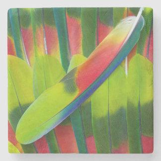 Penas verdes do papagaio de amazon porta copos de pedra