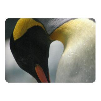 penguin-22.jpg convite 12.7 x 17.78cm
