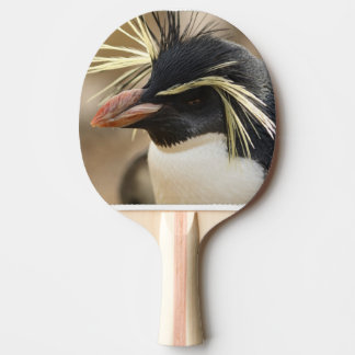 penguin-86.jpg raquete de tênis de mesa