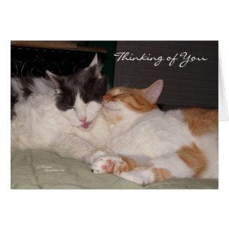 Pensamento de você cartão bonito dos gatos