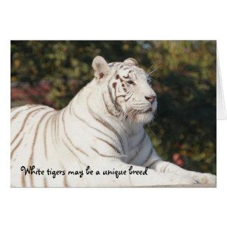 Pensamento original do tigre branco de você cartão