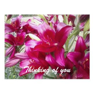 """""""Pensando de você"""" cartão bonito do lírio Cartão Postal"""