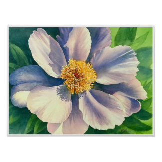 Peônia branca - aguarela - poster 12x16