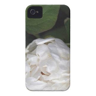 Peônia branca - fotografia floral - capas de capinha iPhone 4