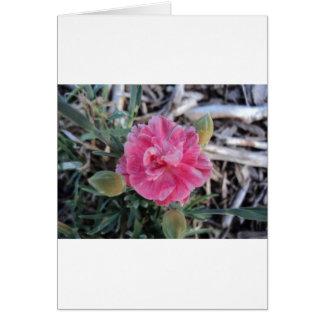 Peônia Cartão Comemorativo