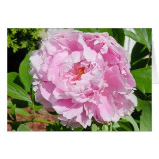 Peônia cor-de-rosa cartão comemorativo