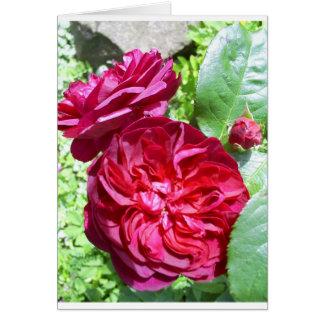 Peônia vermelha cartão comemorativo