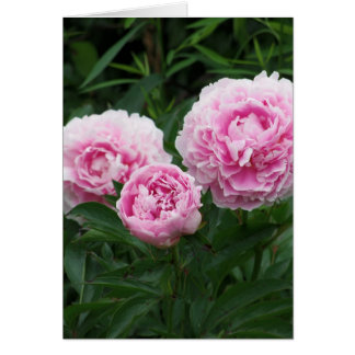 Peônias cor-de-rosa, aniversário cartão comemorativo