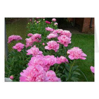 Peônias cor-de-rosa cartão comemorativo