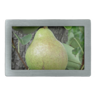 Peras verdes que penduram em uma árvore de pera